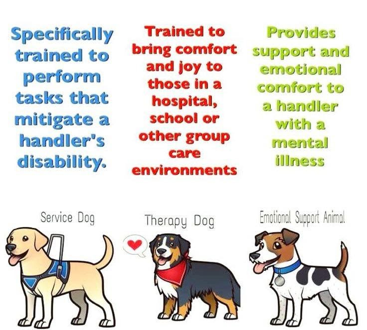 Difference Betwen Therapy and Emotional Support Animals